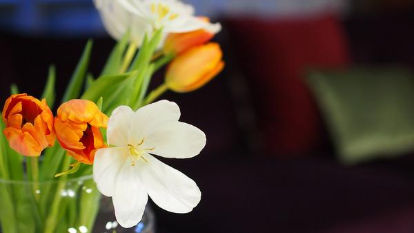 How to Spring Clean Your People and Your Processes in Your Business